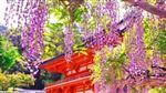 XXI Международный музыкальный фестиваль «Душа Японии»